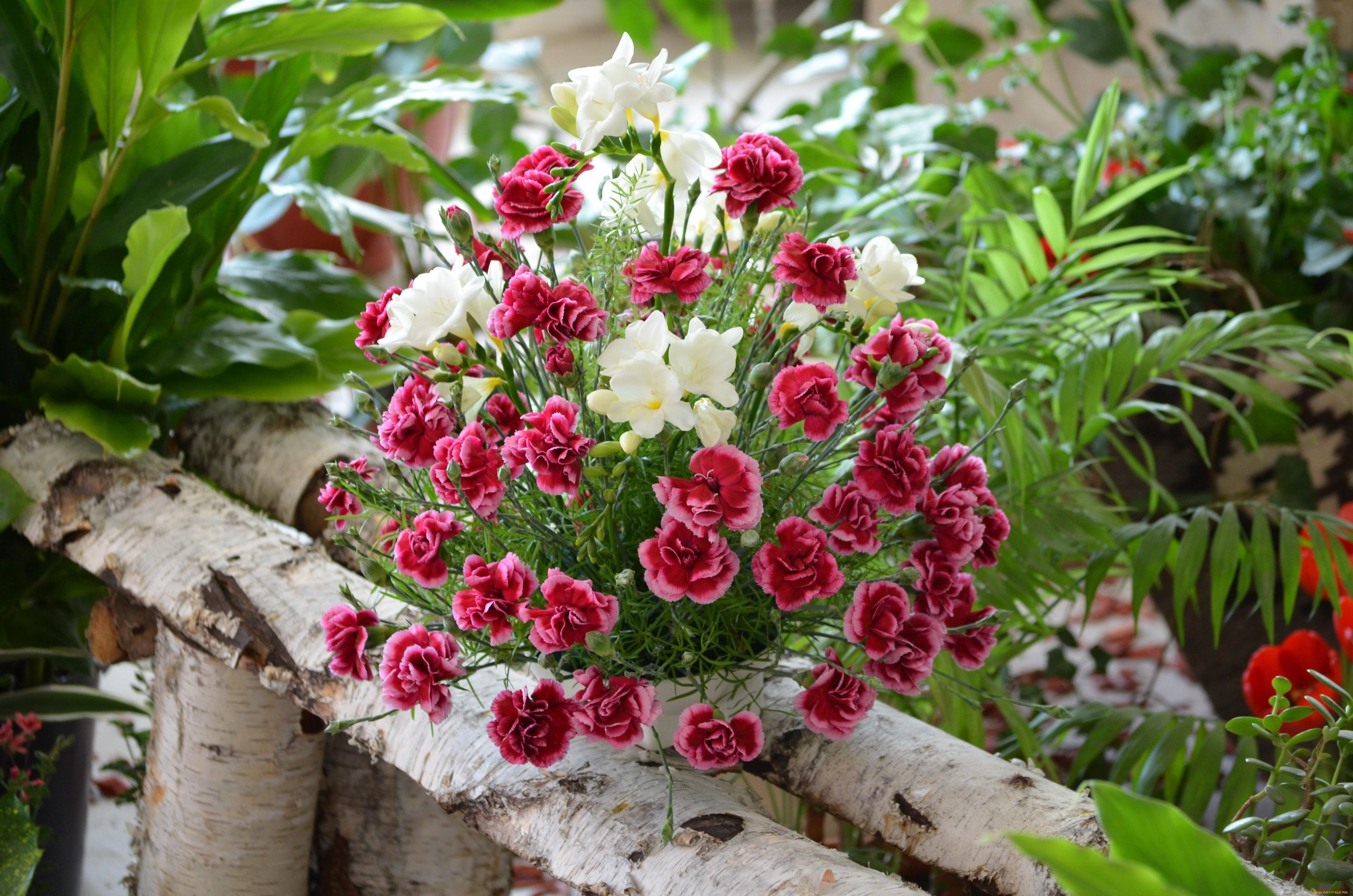 Покажи фото цветов